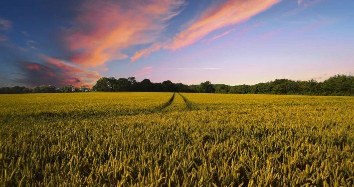 farmland and blue sky